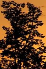 Bildschnitt/34505/foto-bernhard-j-schnittvariante-ii-zur Foto Bernhard J., Schnittvariante II zur Demonstration.