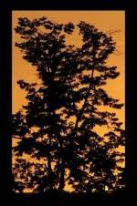 Bildschnitt/34533/foto-bernhard-j-schnittvariante-iia-zur Foto Bernhard J., Schnittvariante IIa zur Demonstration. Kleine aber bedeutende Änderung des Formats.